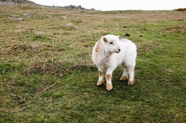Lambie!